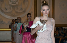 Models and Dogs on the Catwalk