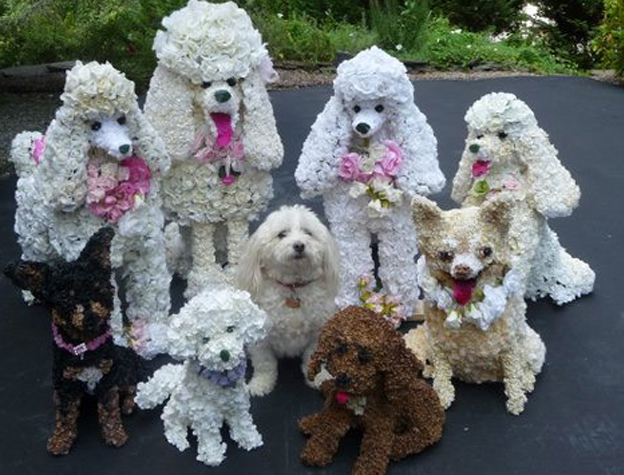 Animal Art Poodles And Pets Created