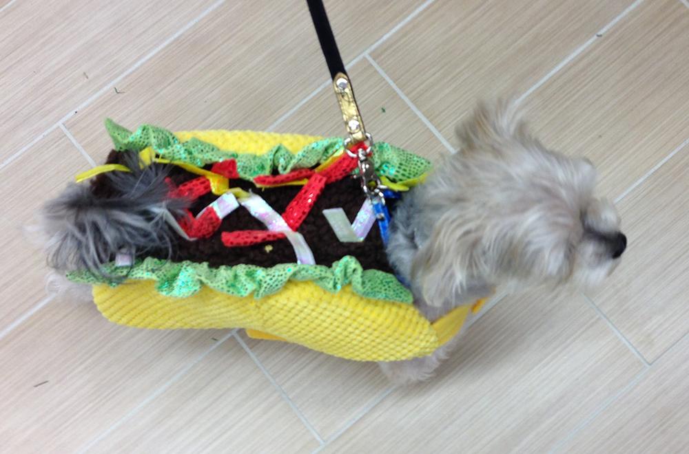Halloween Dog Taco