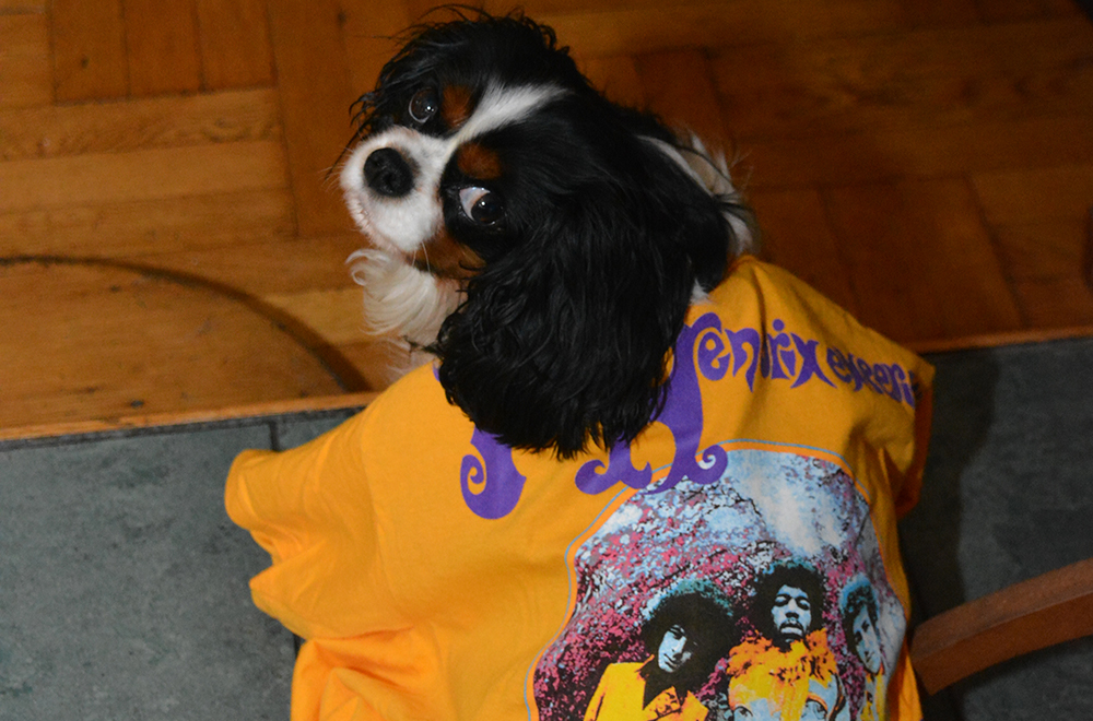 Halloween Dog as Jimi Hendrix Fan