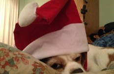 Buddy in Santa Hat