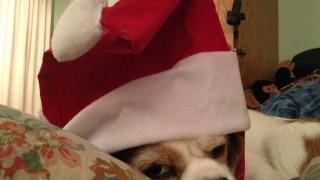 Buddy in Santa Hat