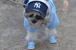 This little Yankee fan walked upright on his two-hind legs all the way down the runway. So adorable.