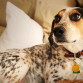 Lost Dog Quigley