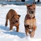 animal-aid-dogs-300x400